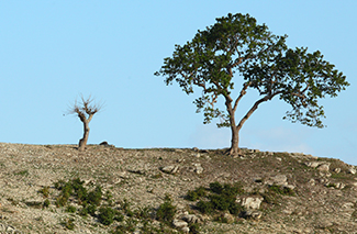 Deforested hillside on La Gonâve
